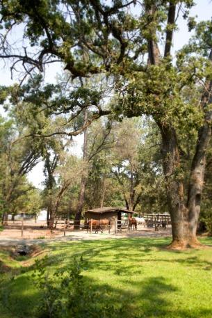 front-pasture-medium