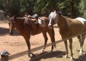 Star (saddled) and Rockstar