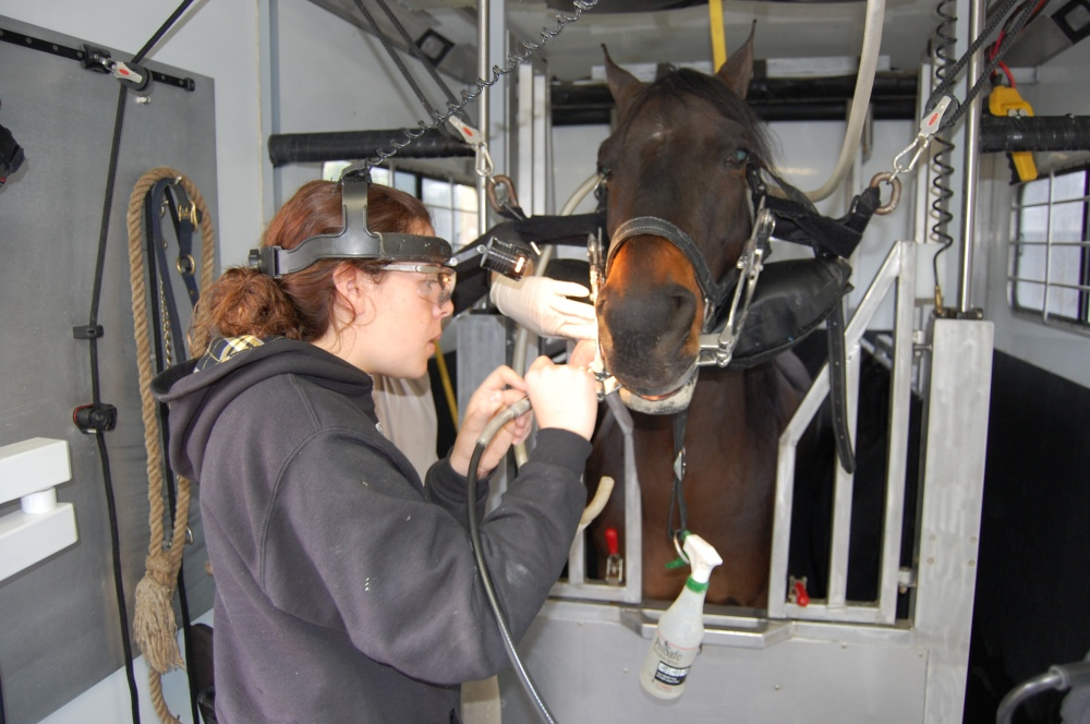 equine dentist clinic