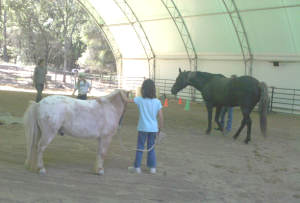 Horsemanship lessons with Erin Murphy