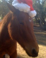 River in Santa Hat