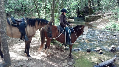 Dave helping Smudge gain confidence with creeks