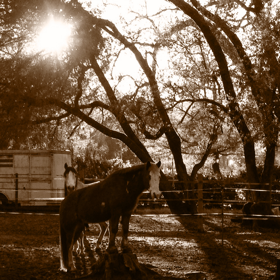 Paint pony standing on a tree stump while an Arabian horse looks on