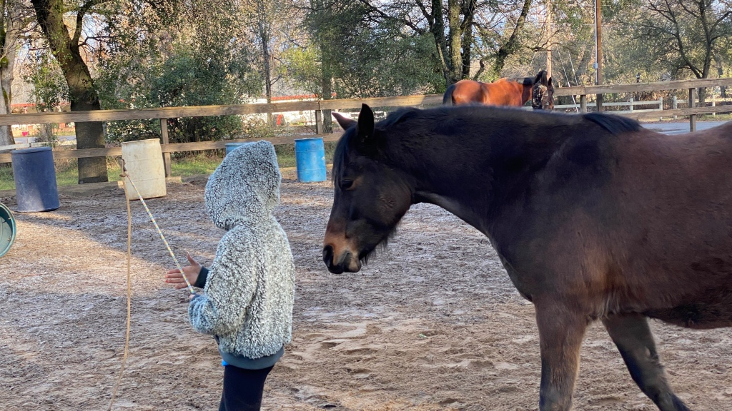Pony named Gizmo with  a youth student